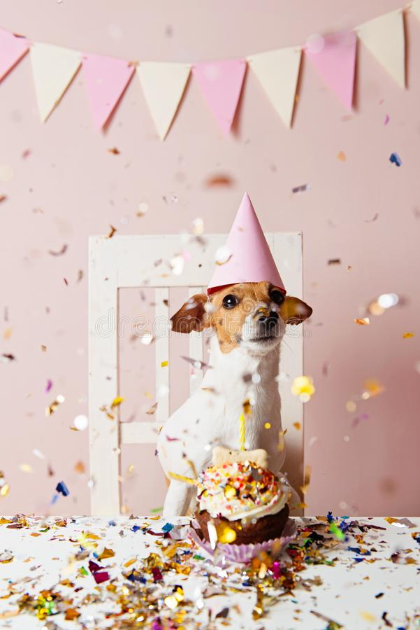 Cute dog with a party hat celebrating her birthdayCute dog with a party hat celebrating her birthday, confetti falling. Cute dog with a party hat celebrating her stock photo