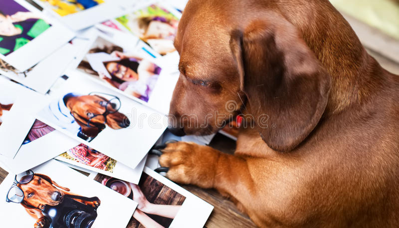Cute dog among the photos royalty free stock photos