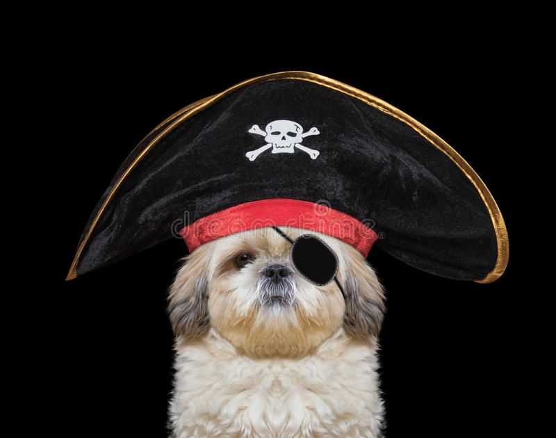 Cute dog in a pirate costume. Isolated on black royalty free stock images