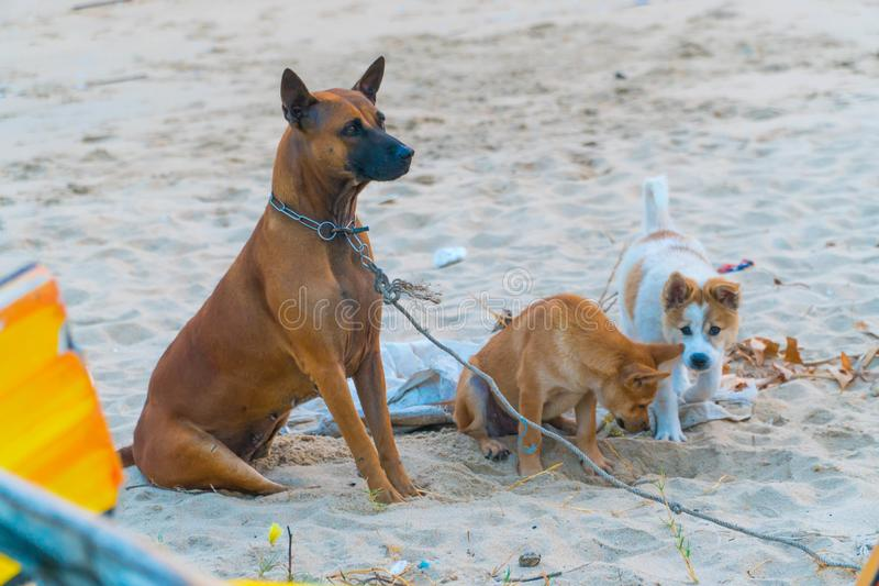 Cute dog puppies playing on the sand beach. Dog shelter concept. stock photo