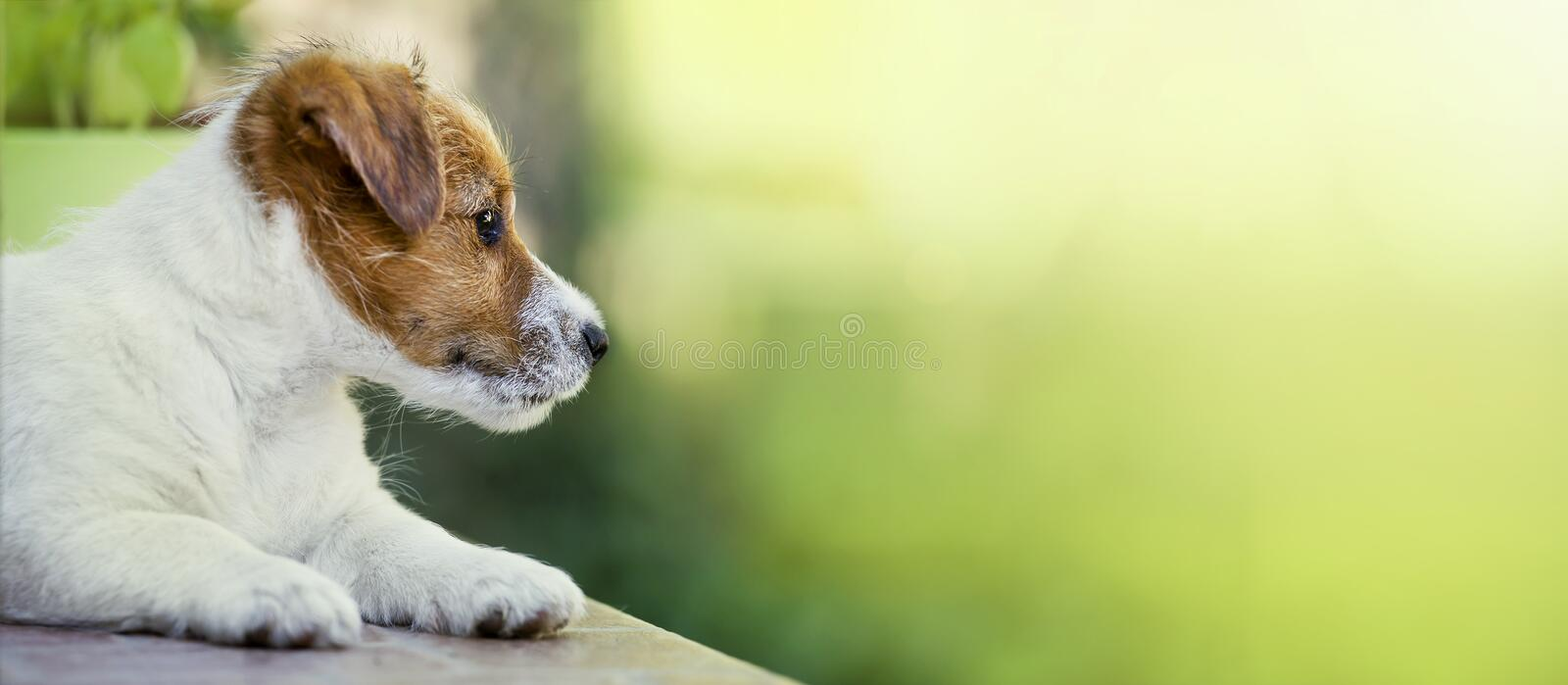 Cute dog puppy thinking - web banner idea royalty free stock photos