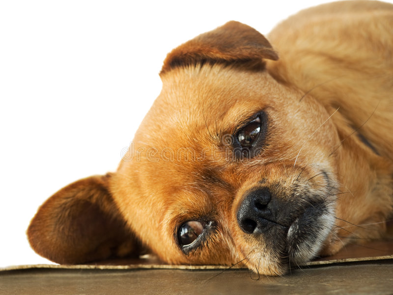 Download Cute Dog Resting Stock Photo - Image: 6774410