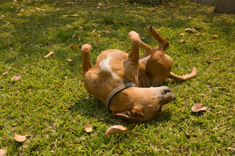 Download Cute dog rolling stock image. Image of domesticated, canidae - 6425663
