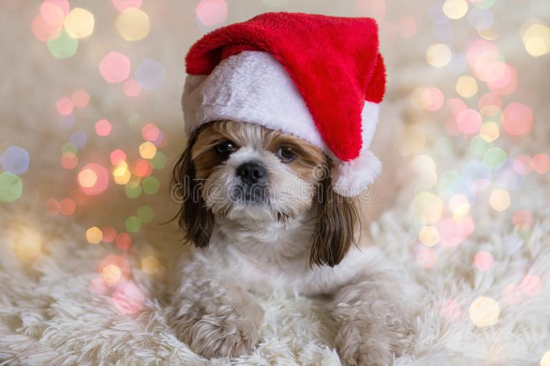 Cute dog in Santa Claus hat. Carnival, celebration. Puppy with christmas hat stock images