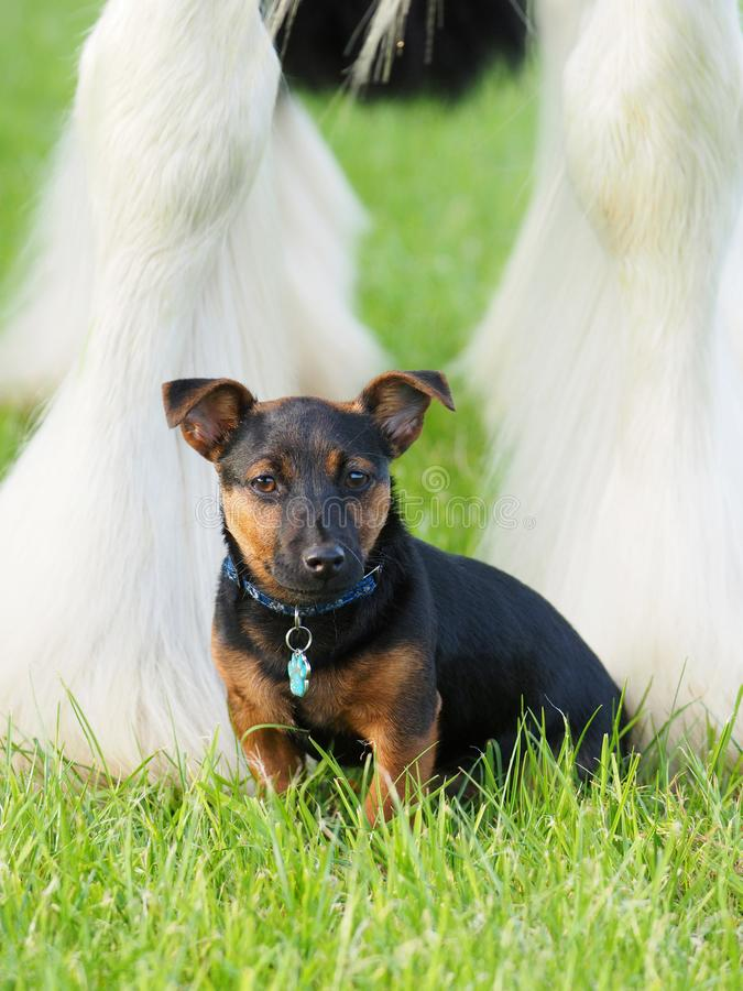 Horse and Dog stock image