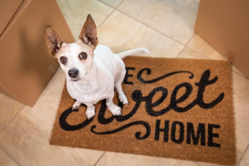 Cute Dog Sitting on Home Sweet Home Welcome Mat on Floor Near Boxes royalty free stock photos
