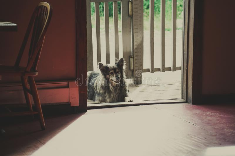 Cute dog sitting patiently in a doorway on a sunny day royalty free stock photography