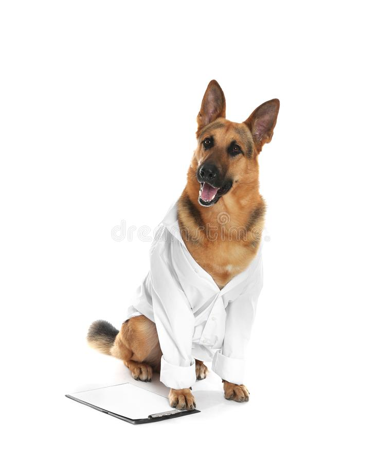 Cute dog in uniform with clipboard as veterinarian on white. Background royalty free stock photo