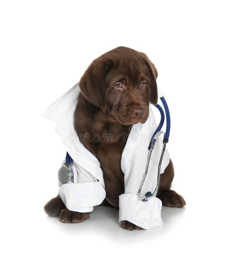 Cute dog in uniform with stethoscope as veterinarian on white. Background royalty free stock photos