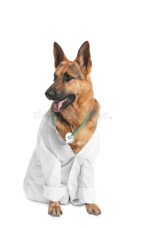Cute dog in uniform with stethoscope as veterinarian. On white background royalty free stock images