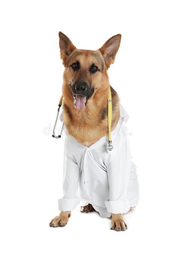 Cute dog in uniform with stethoscope as veterinarian. On white background stock images