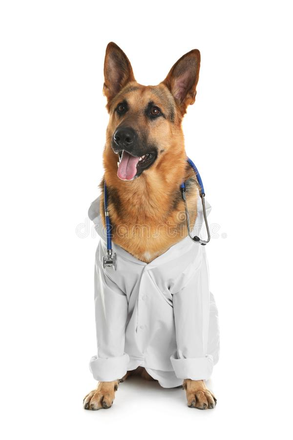 Cute dog in uniform with stethoscope as veterinarian. On white background stock photography