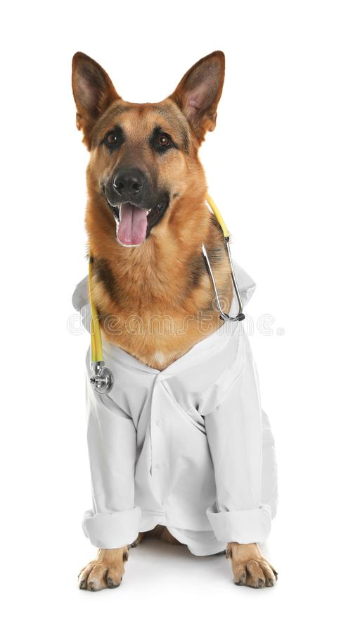 Cute dog in uniform with stethoscope as veterinarian on white. Background stock photo