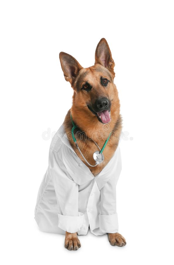 Cute dog in uniform with stethoscope as veterinarian. On white background stock image