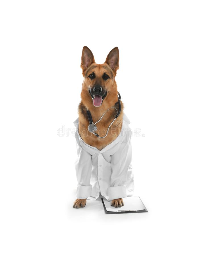 Cute dog in uniform with stethoscope and clipboard as veterinarian. On white background stock photos