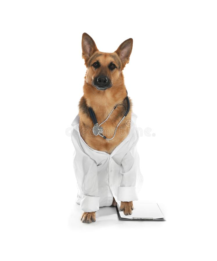 Cute dog in uniform with stethoscope and clipboard as veterinarian. On white background stock photo