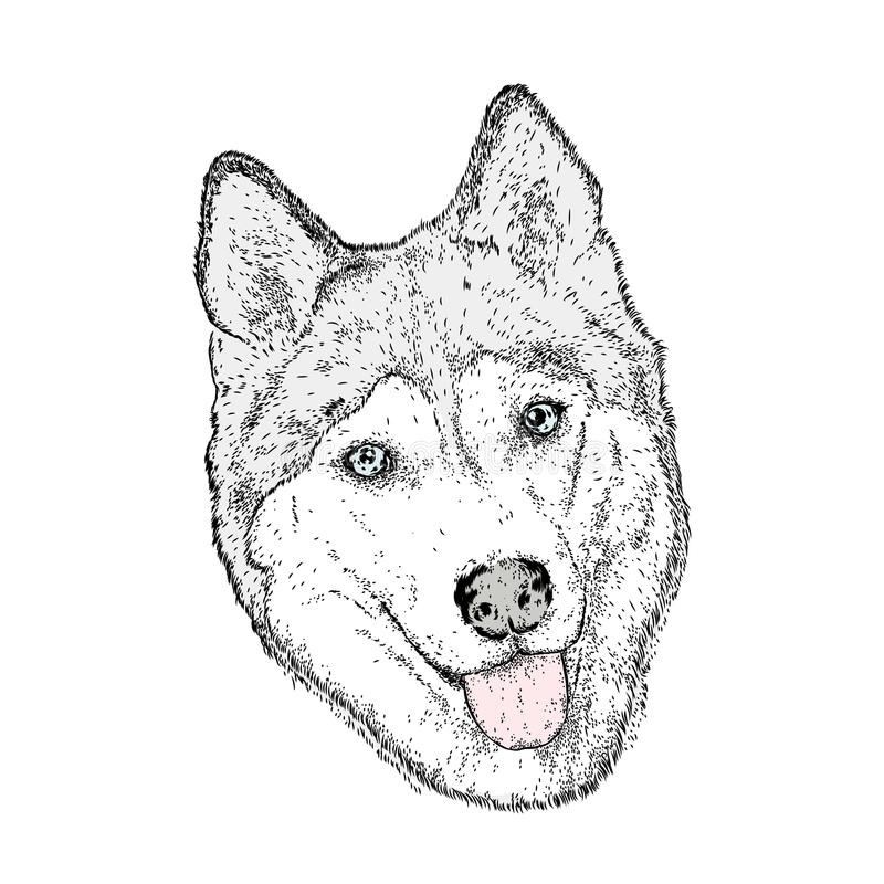 Cute dog in the vector. Husky. stock illustration