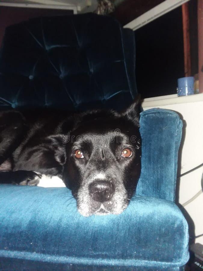 Digger dog stock image