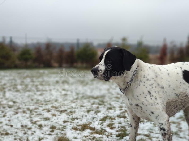 Cute doggo royalty free stock photo