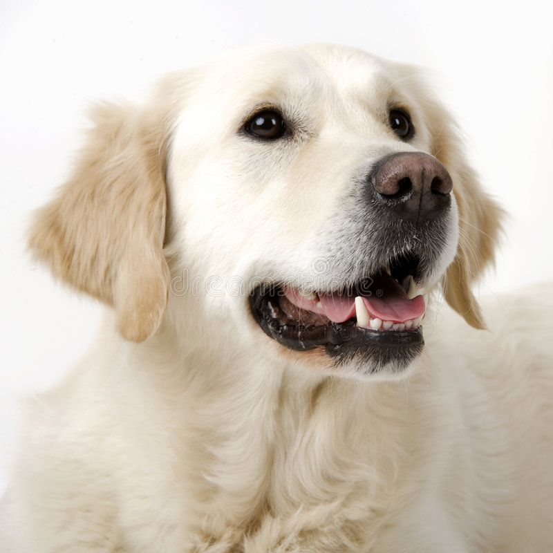 Cute doggy stock images