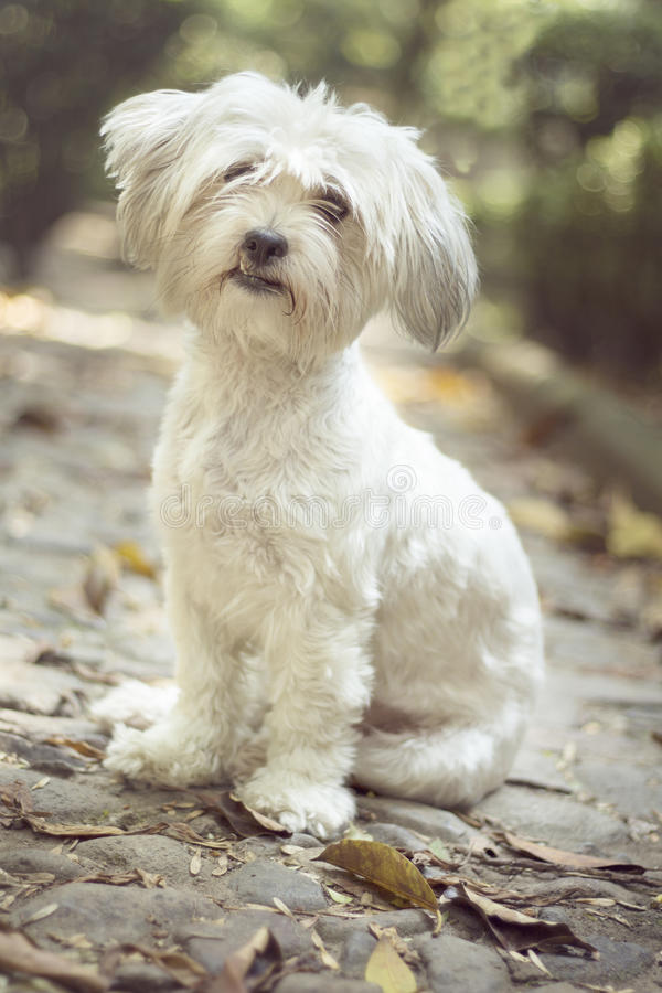 Cute doggy resting in a park royalty free stock photos