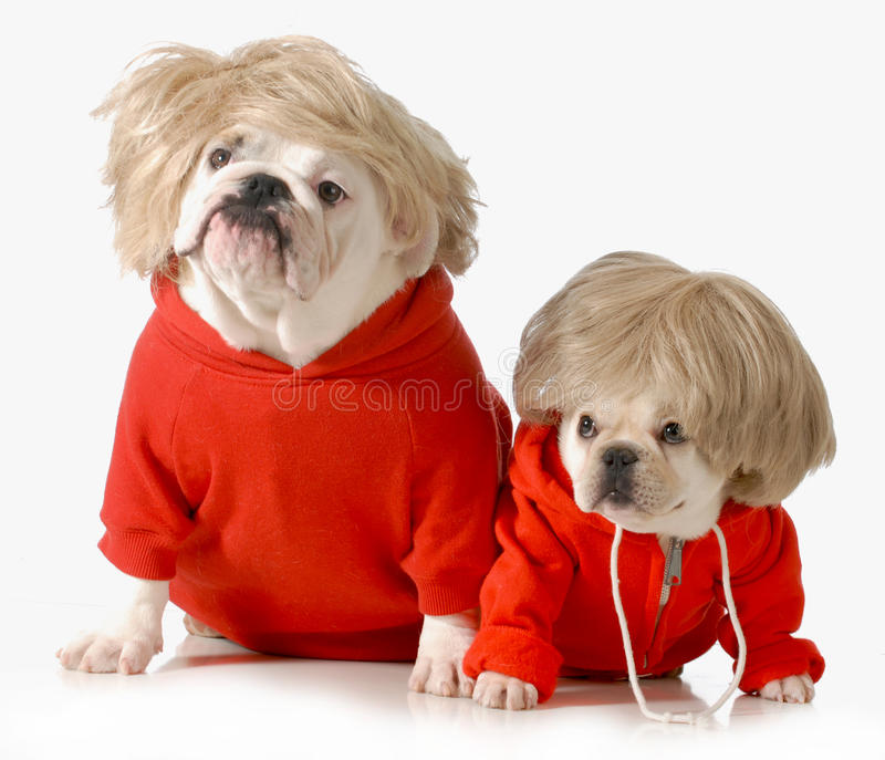Cute dogs stock photography
