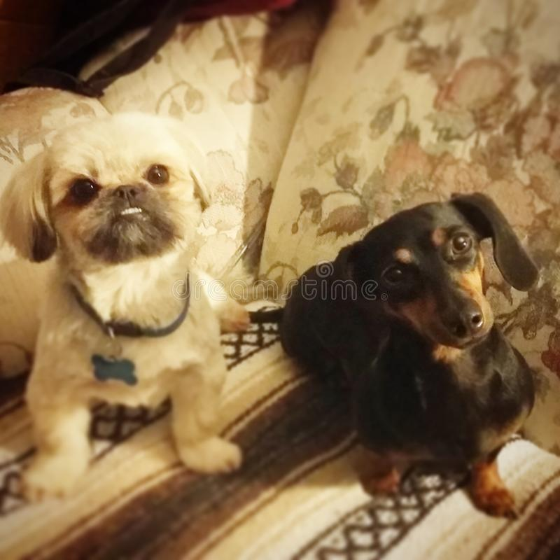Cute dogs looking at me! stock images