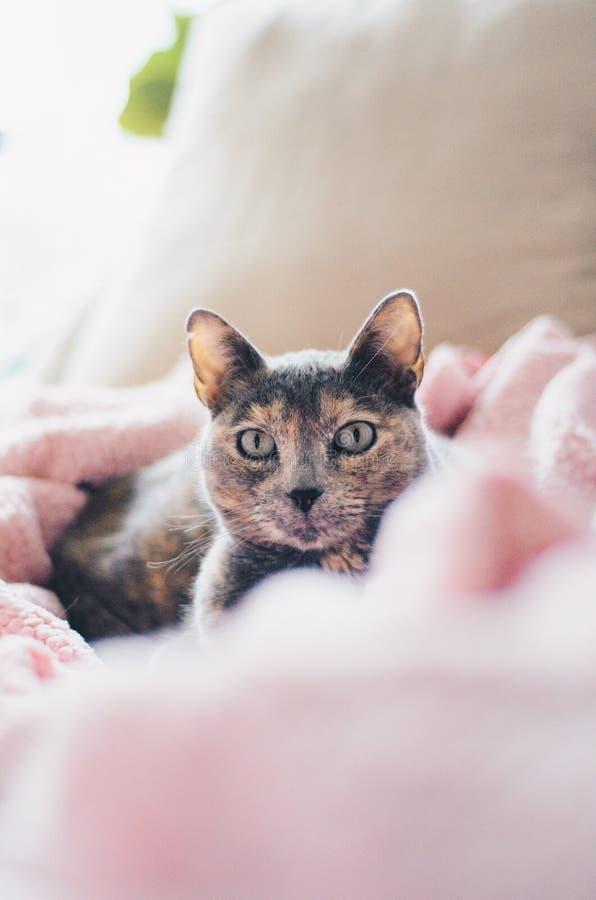 Cute domestic grey cat in a house. A cute domestic grey cat in a house stock photography