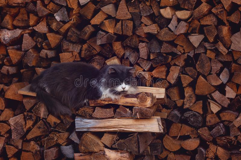 The cute Domestic Grey cat is sleeping on the logs. The cute Domestic Grey cat is sleeping on the logs royalty free stock photo