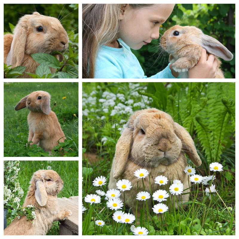 Cute dwarf rabbit stock image