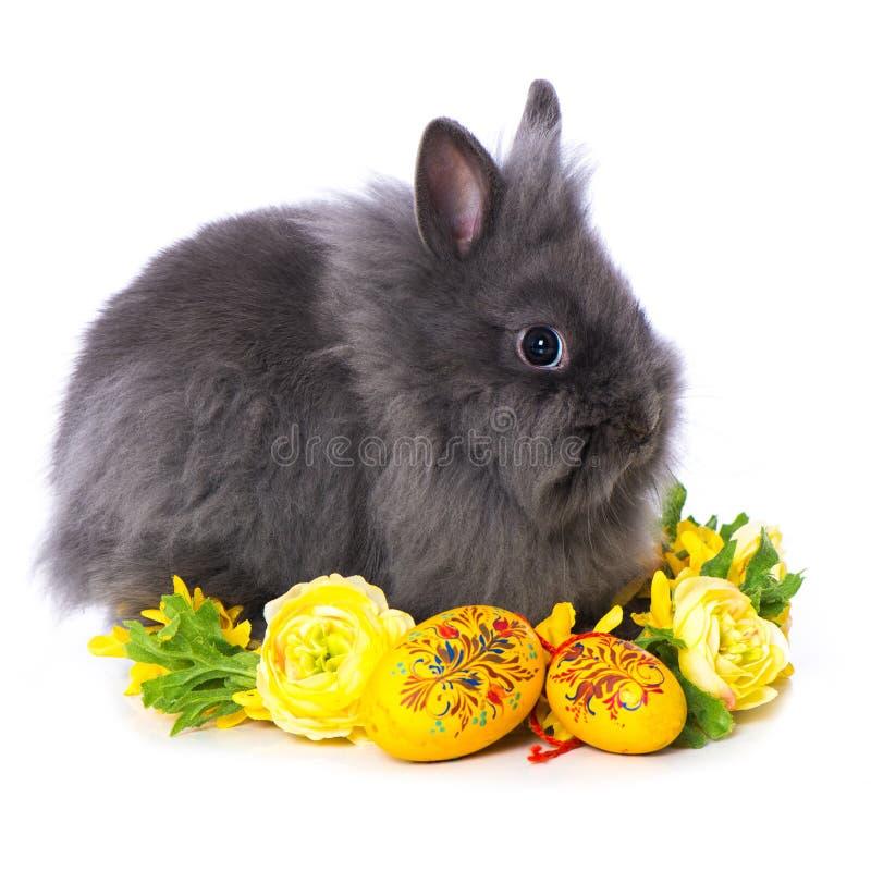 Free Cute Dwarf Rabbit With Flower Wreath Stock Image - 209615581