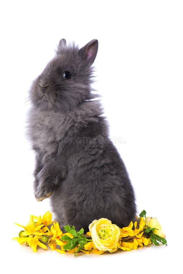Free Cute Dwarf Rabbit With Flower Wreath Stock Photo - 209615730