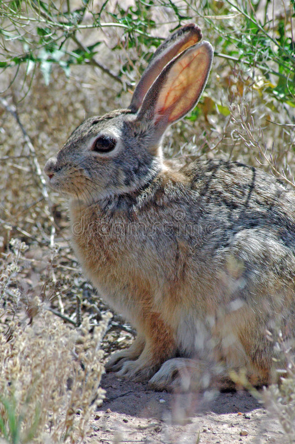Download Cute Ears Stock Photography - Image: 195502