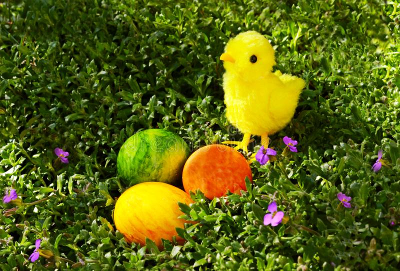 Cute Easter chick with three colored eggs royalty free stock photo