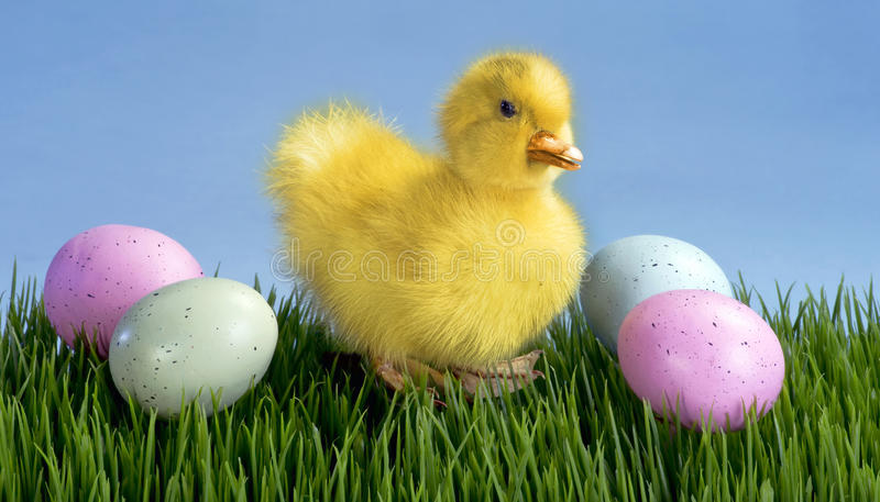 Cute Easter Duck. Cute little Easter duck and easter eggs stock photo