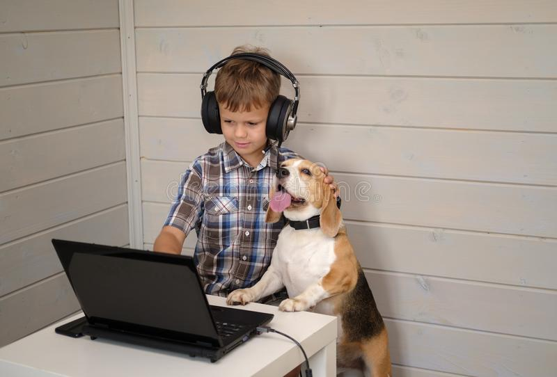 Cute European boy with headphones and Beagle dog looking at the laptop screen. the boy plays computer games, communicates with the stock photography