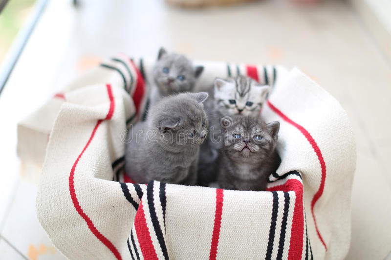 Cute face, newly born kittens. On a traditional handmade carpet, red striped rug royalty free stock images