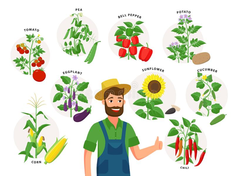 Cute farmer and his harvest around him. Set of vegetable plants and ripe fruits, tomato, chili pepper, sunflower, corn stock illustration