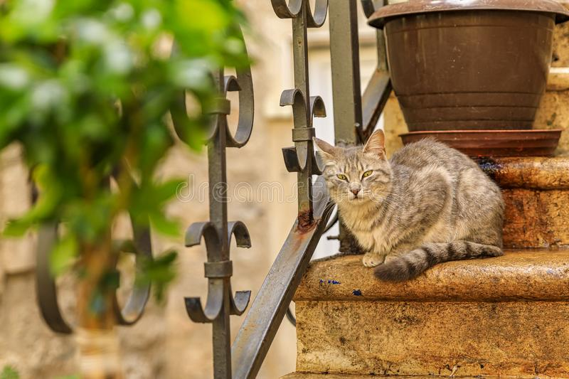 Cute feral alley cat in Budva medieval Old Town with Mediterranean stone house in the background in Montenegro, Balkans royalty free stock photos