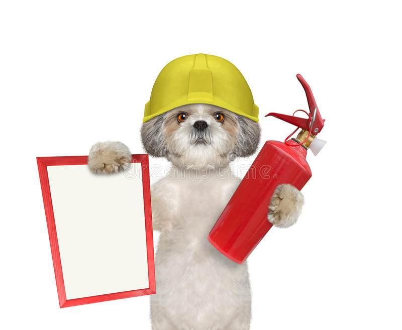 Cute firefighter dog is ready to work stock image