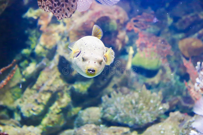 Cute fish aquarium of barcelona stock image image for Cute freshwater fish