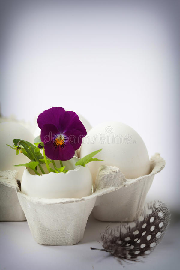 Free Cute Flowers In Egg Shells For Easter Stock Photos - 85774973