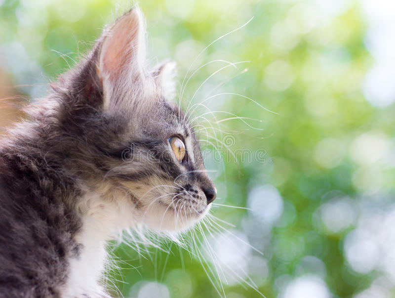 A cute fluffy cat on natural background stock images