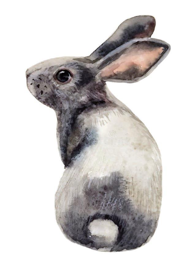 Cute fluffy gray Bunny sitting stock illustration