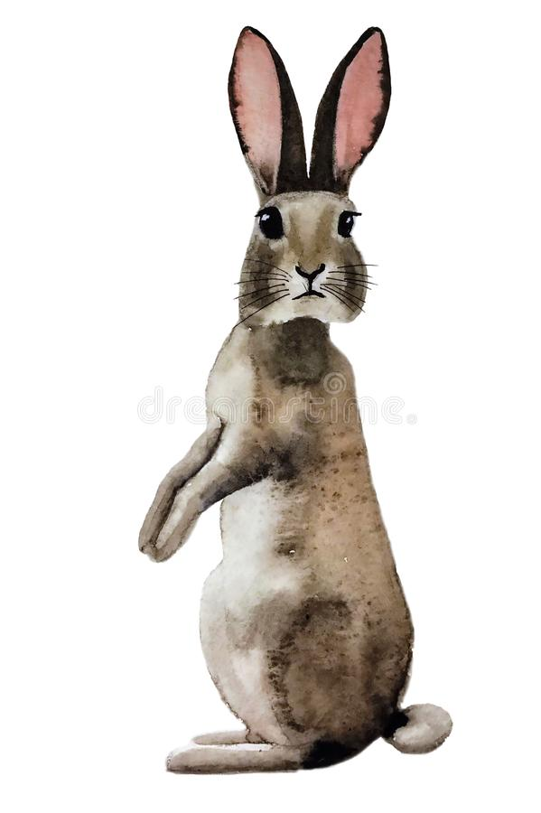 Free Cute Fluffy Grey Rabbit Should Turn To Us Royalty Free Stock Photography - 109076547