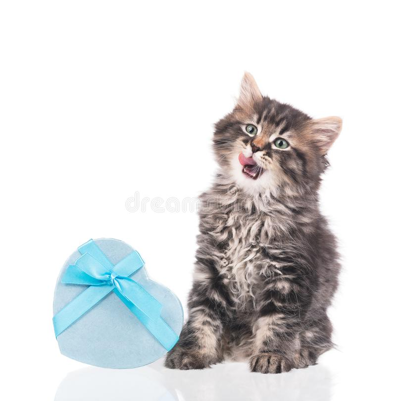 Cute fluffy kitten royalty free stock photography