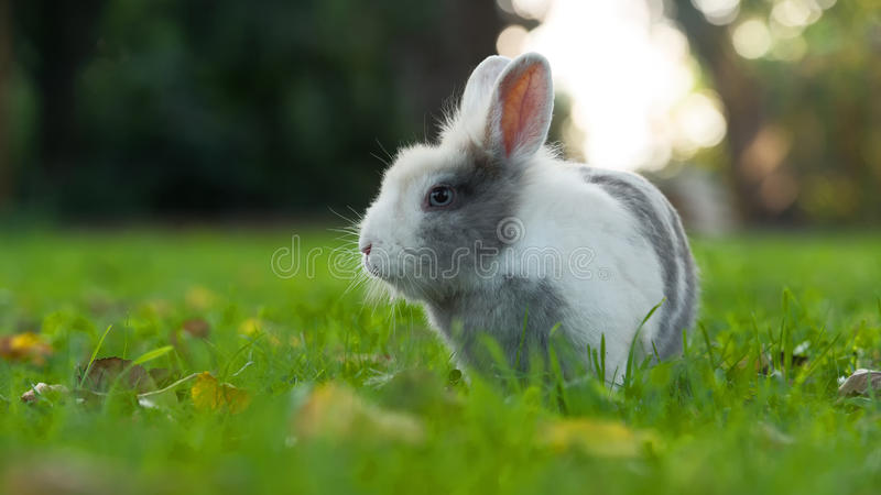 Cute Fluffy Rabbit on Green Grass in Summer (16:9 Aspect Ratio) stock photography
