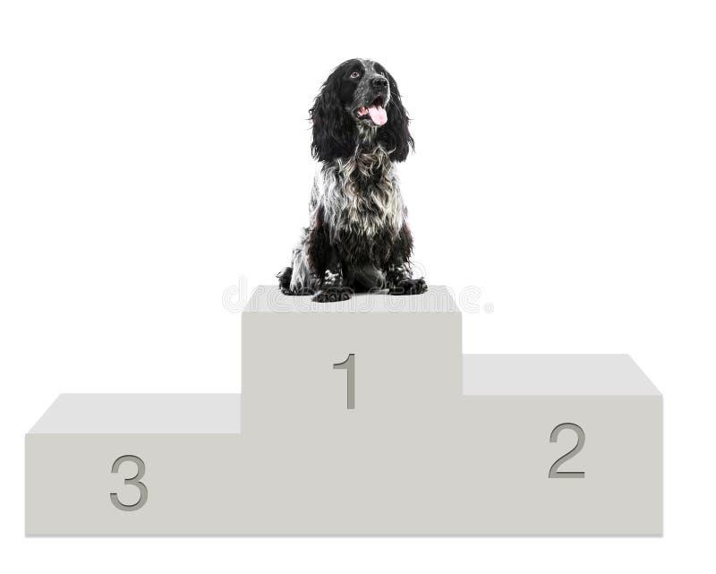 Cute fluffy white black dog sitting isolated stock image