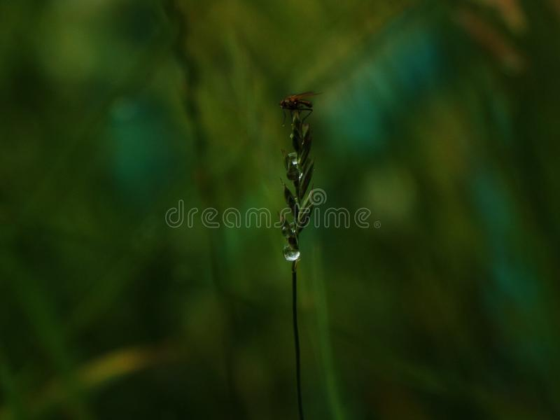 Cute fly in rain royalty free stock photography
