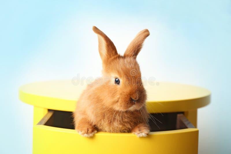 Cute foxy rabbit sitting in drawer. Cute foxy rabbit sitting in yellow drawer stock photo